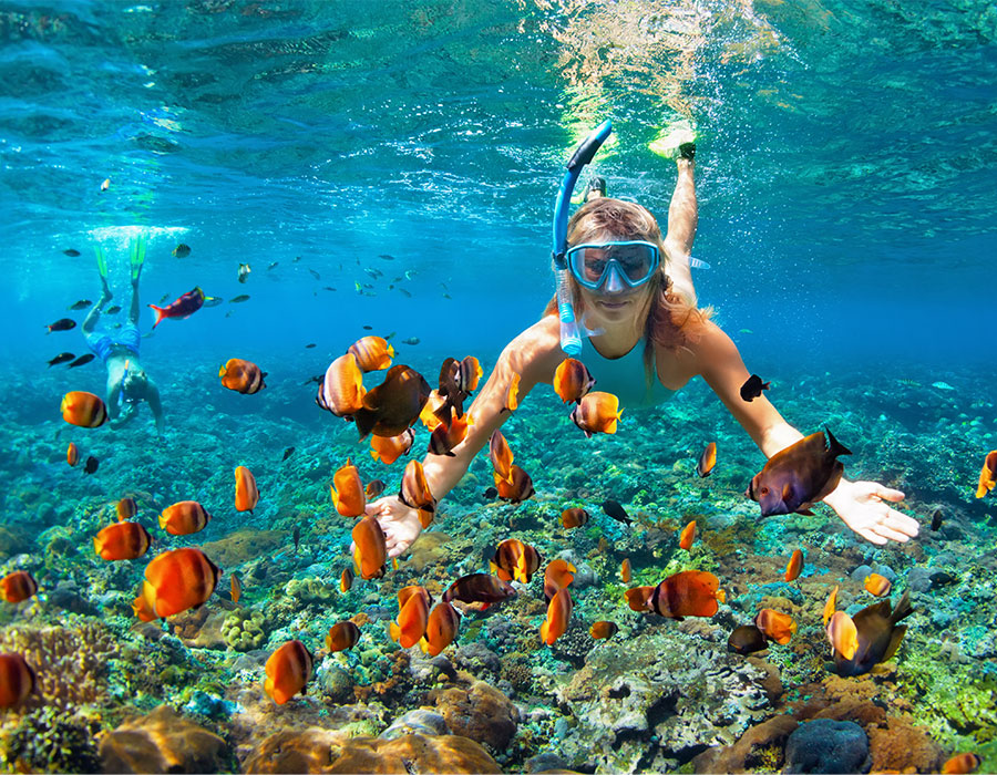 Snorkeling with fish in Antigua