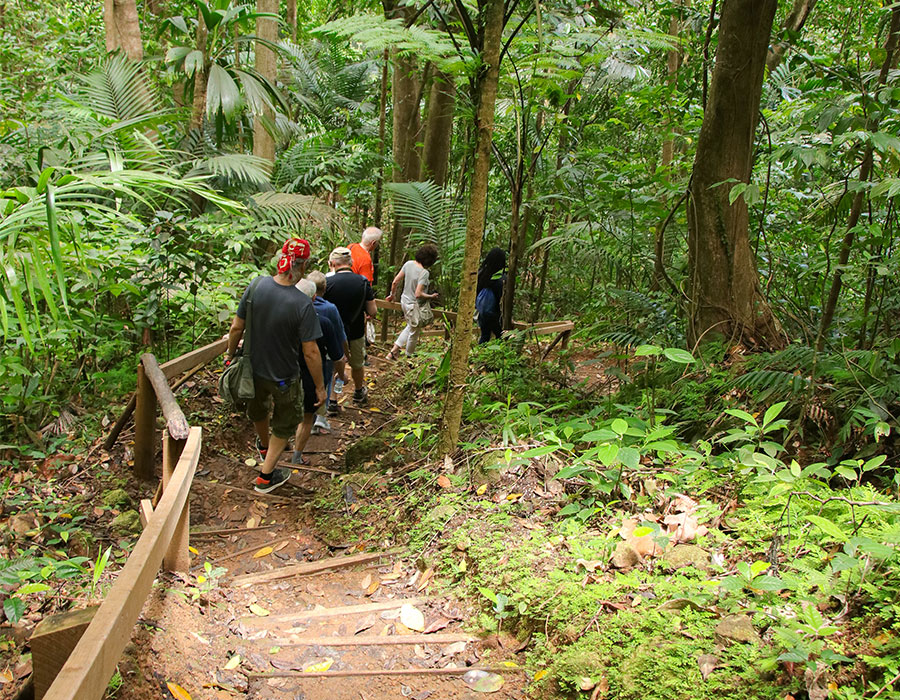 Hiking on a jungle trail in St. Lucia